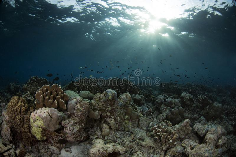 Underwater Scene with blue background royalty free stock photos