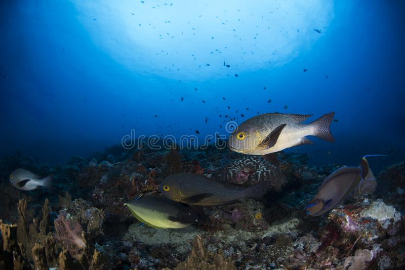 Underwater Scene with blue background stock photography