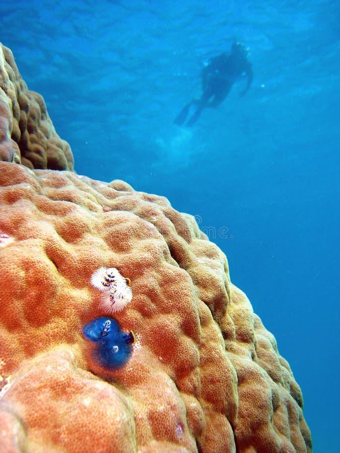Free Underwater Scene Of Great Barrier Reef Royalty Free Stock Photos - 14952648