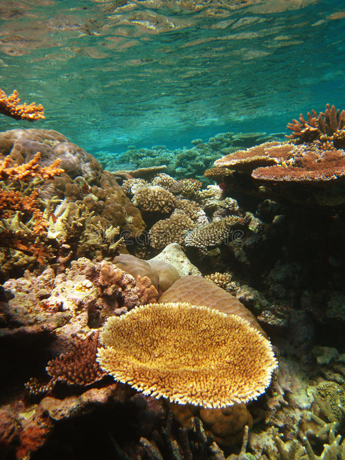 Free Underwater Scene Of Great Barrier Reef Royalty Free Stock Photography - 14952657