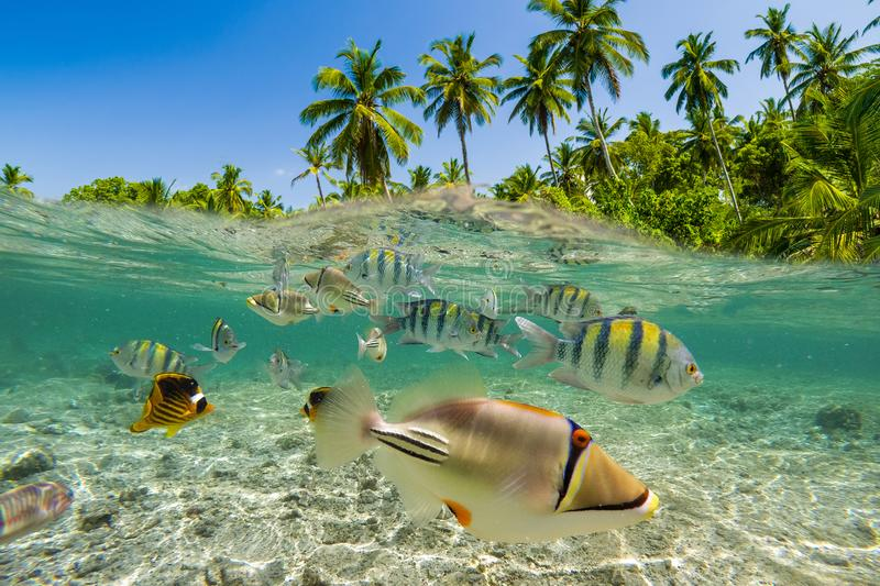 Underwater Scene With Reef And Tropical Fish royalty free stock photography