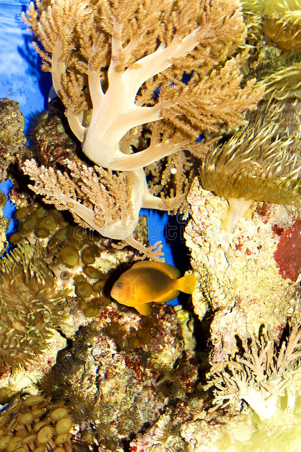 Underwater scenery royalty free stock images