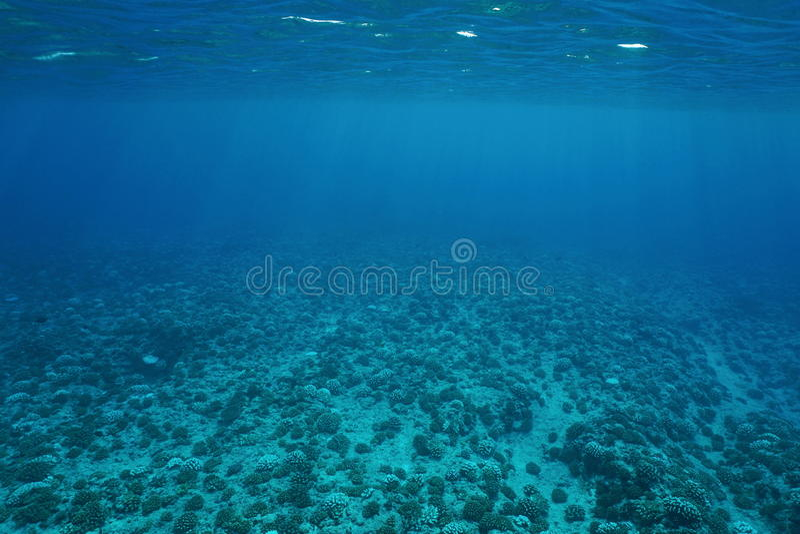 Underwater scenery ocean floor Pacific ocean royalty free stock photo