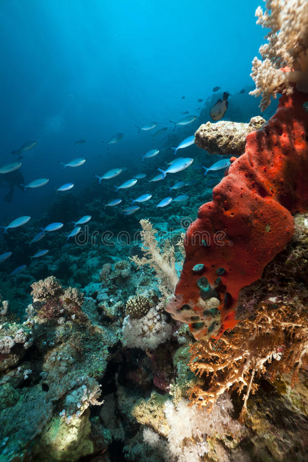 Download Underwater Scenery In The Red Sea. Stock Images - Image: 19063304