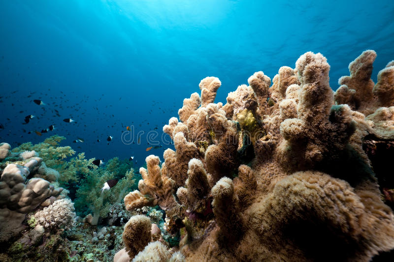 Download Underwater Scenery In The Red Sea. Stock Photo - Image: 19064028