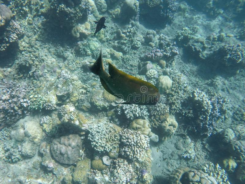 Underwater view of coral reefs and colorful fish. stock photos
