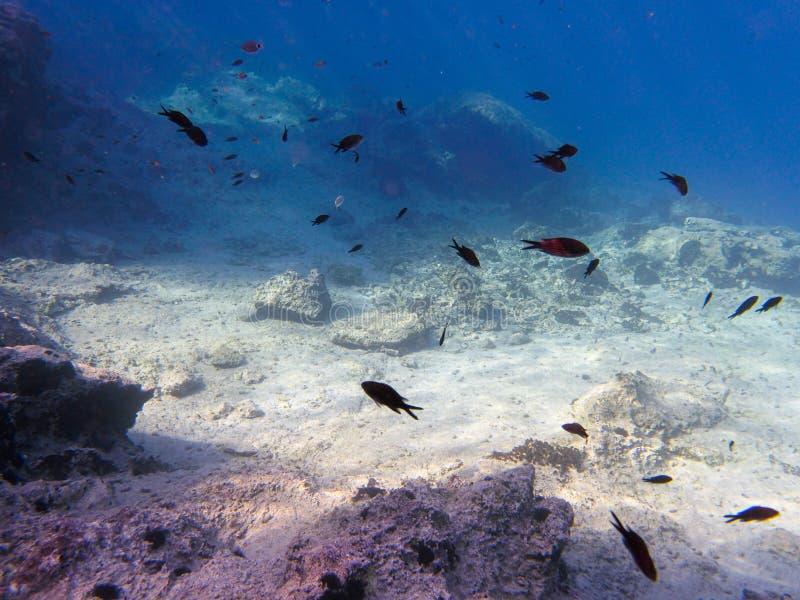 UNDERWATER sea level photo. Small fishes in marine life of the Aponissos beach, Agistri island, Saronic Gulf, Attica, Greece. Horizontal royalty free stock photos