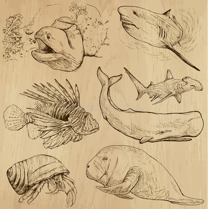 Free Underwater, Sea Life (vector Set No.4) - Hand Drawn Stock Photo - 41160160