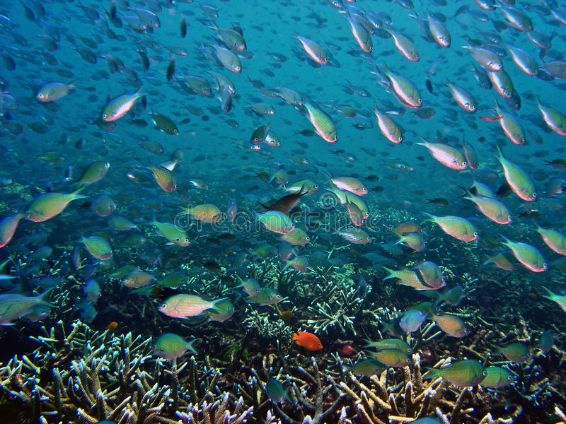Underwater Seascape royalty free stock photography