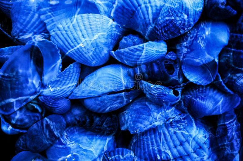 Underwater seashells background or vacation concept image stock photos