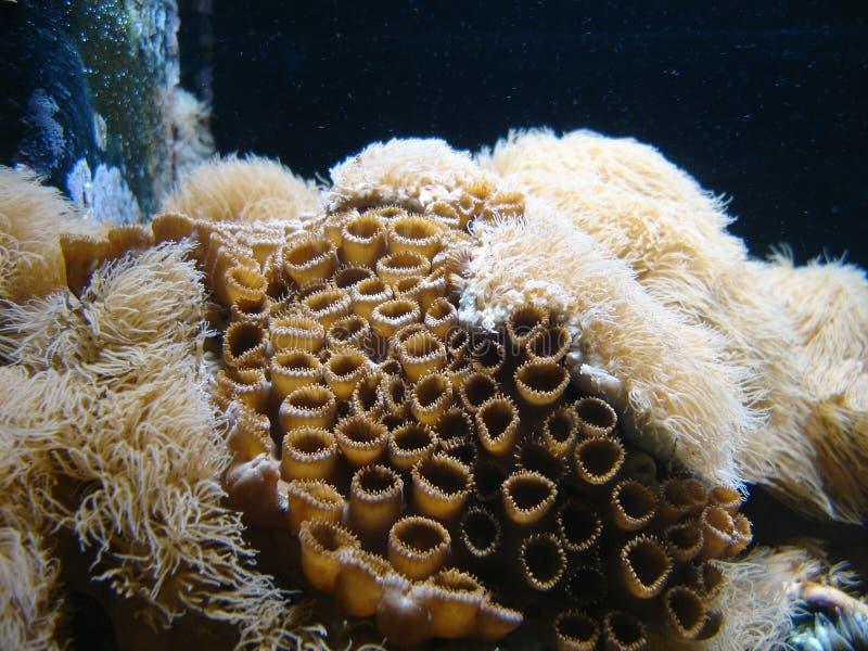 Underwater Series Stock Images