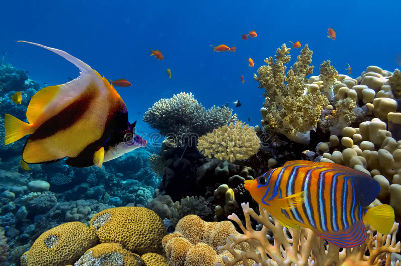 Underwater shoot of vivid coral reef with a fishes stock photography