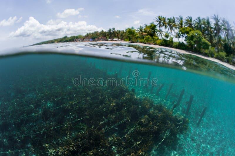 Underwater shot of sea weed royalty free stock photos