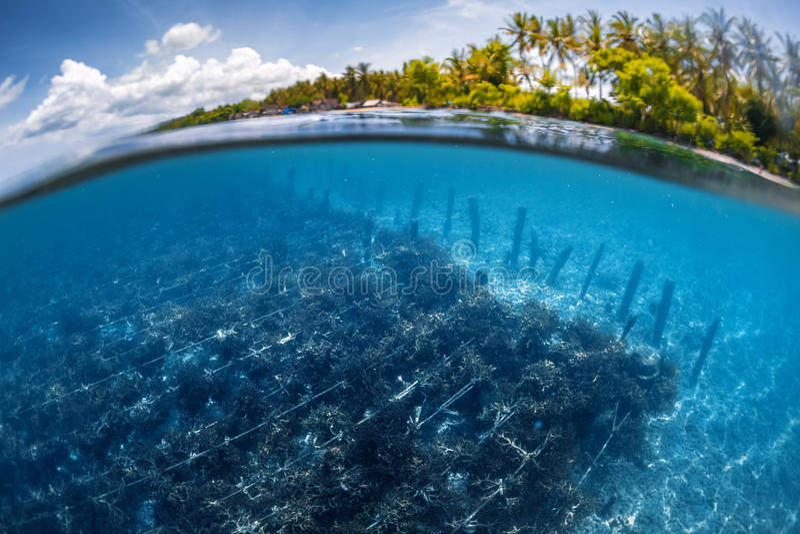 Underwater split shot of the sea weed garden stock photos