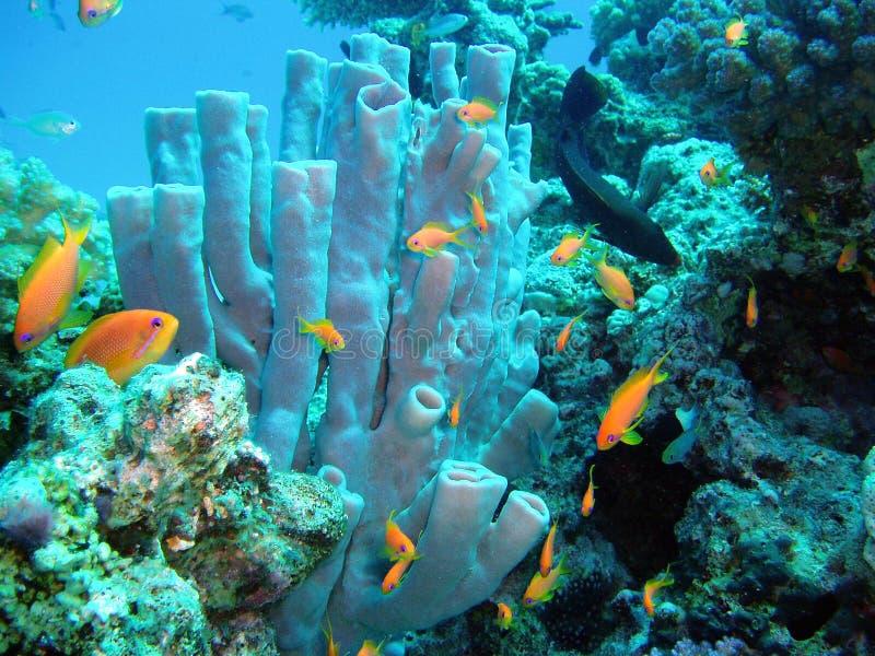 Underwater sponge stock photography
