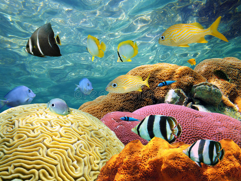 Underwater surface. Underwater Coral scene on a reef with colorful fishes and water surface in background