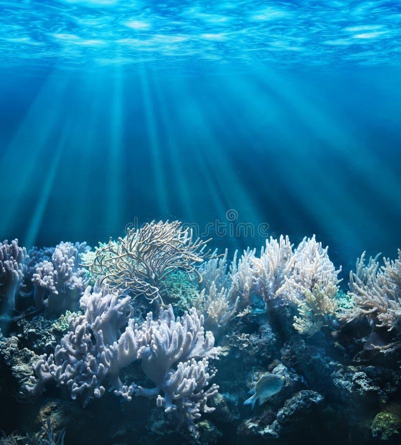 Download Underwater stock photo. Image of life, reef, coral, ocean - 33438108