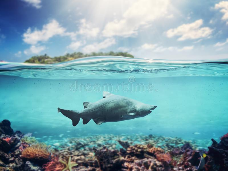 Underwater of tropical ocean. Coral reef and shark. Island in the background under sunny sky royalty free stock photography