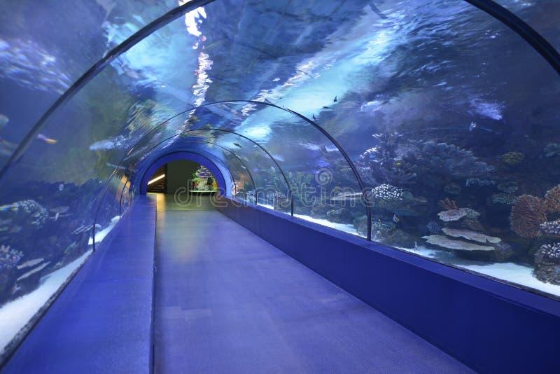 underwater tunnel aquarium antalya turkey stock image image of turkish aquarium 49829417. Black Bedroom Furniture Sets. Home Design Ideas
