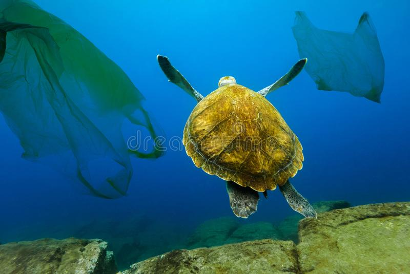 Underwater turtle floating among plastic bags. Concept of pollution of water environment royalty free stock photography