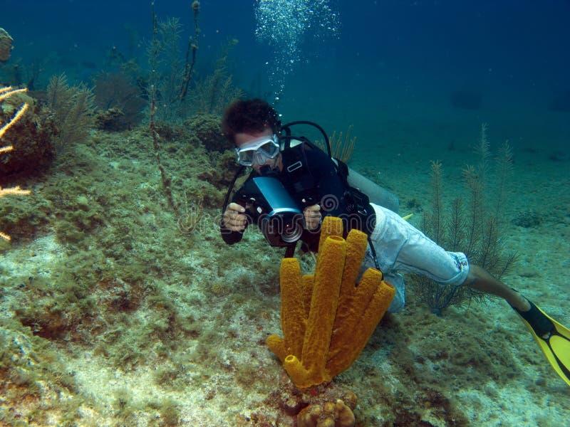 Underwater Vidiographer shooting a Tube Sponge. Underwater Videographer shooting a Tube Sponge in Cayman Brac stock image