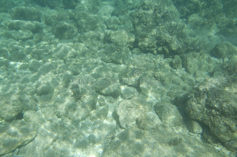 Underwater view stock images