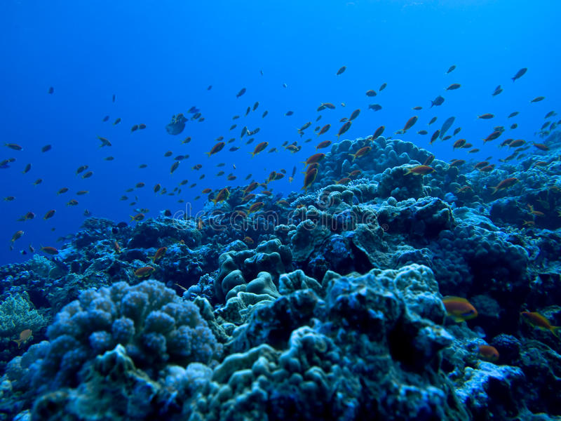 Download Underwater view stock image. Image of fishes, shoal, egypt - 9764905