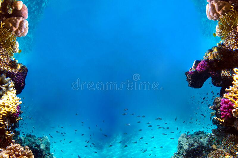 Underwater view of the coral reef and Tropical Fish.  royalty free stock photo