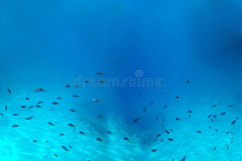 Underwater view of the coral reef and Tropical Fish.  stock photo