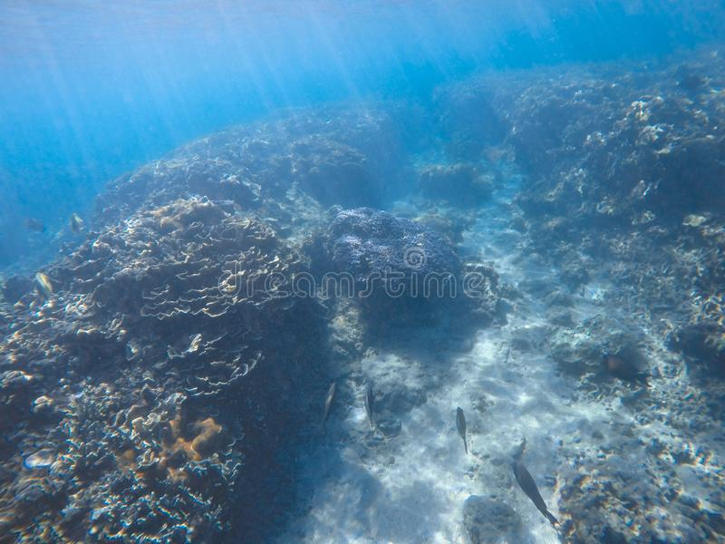 Underwater scene of fish, rock, coral reefs, and rays of light. stock photo