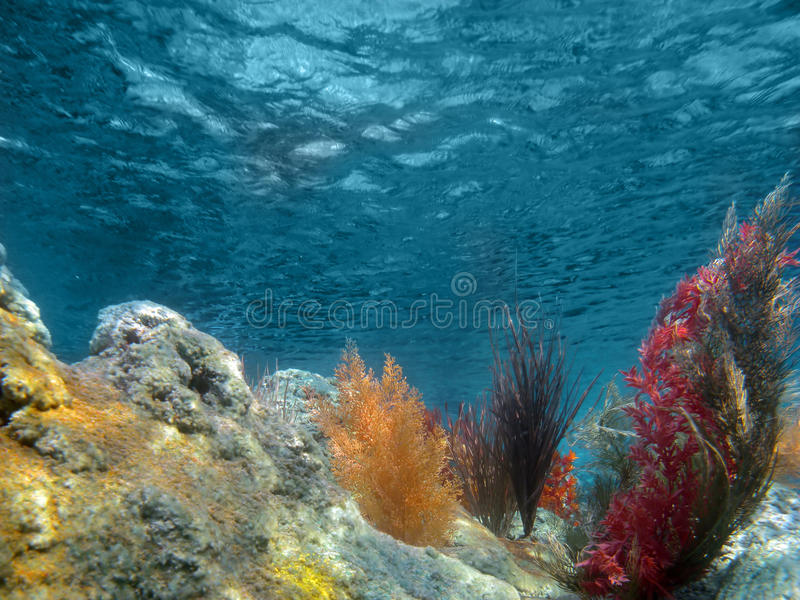 Underwater View of the Ocean With Plants and Coral stock image