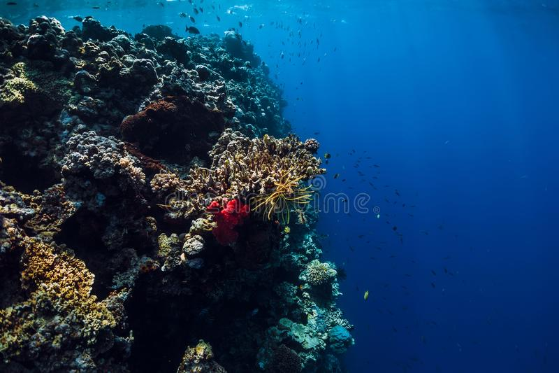 Underwater view with rocks and corals in blue ocean. Menjangan island. Bali royalty free stock images