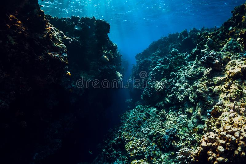 Underwater view with rocks and corals in blue ocean. Menjangan island. Bali royalty free stock photography