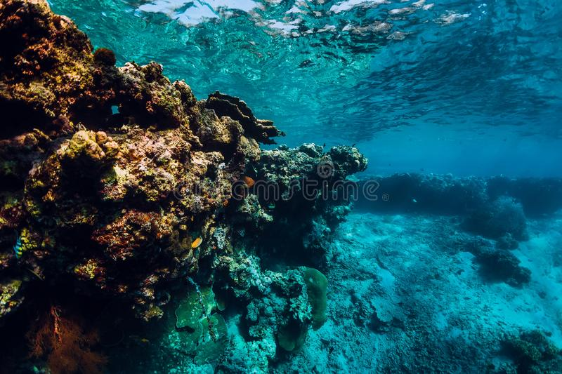 Underwater view with rocks and corals in blue ocean. Menjangan island. Bali royalty free stock photo