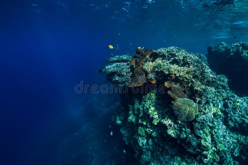Underwater view with rocks and corals in transparent blue ocean. Underwater landscape royalty free stock image