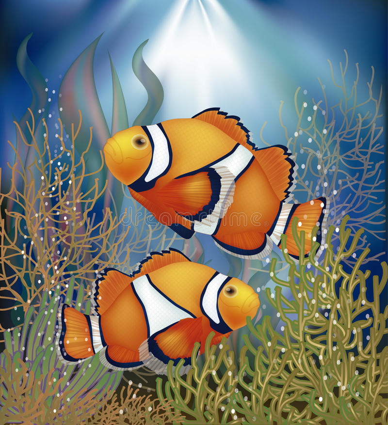 Underwater wallpaper with clownfish, vector royalty free illustration