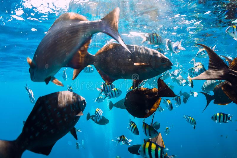 Underwater wild world with fishes and sea royalty free stock photo
