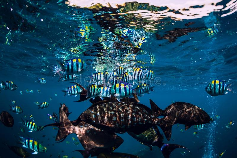Underwater wild world with school of fish in ocean. Underwater wild world with school of fish in blue ocean royalty free stock photo