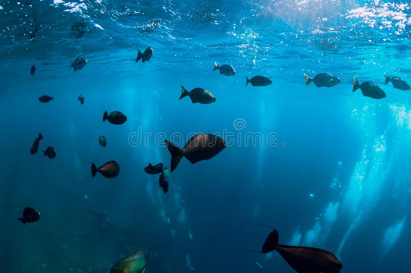 Underwater wild world with tuna school fishes and bubble stock photos