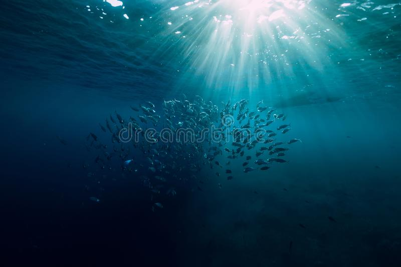 Underwater wild world with tuna school fishes and beautiful sun light stock image