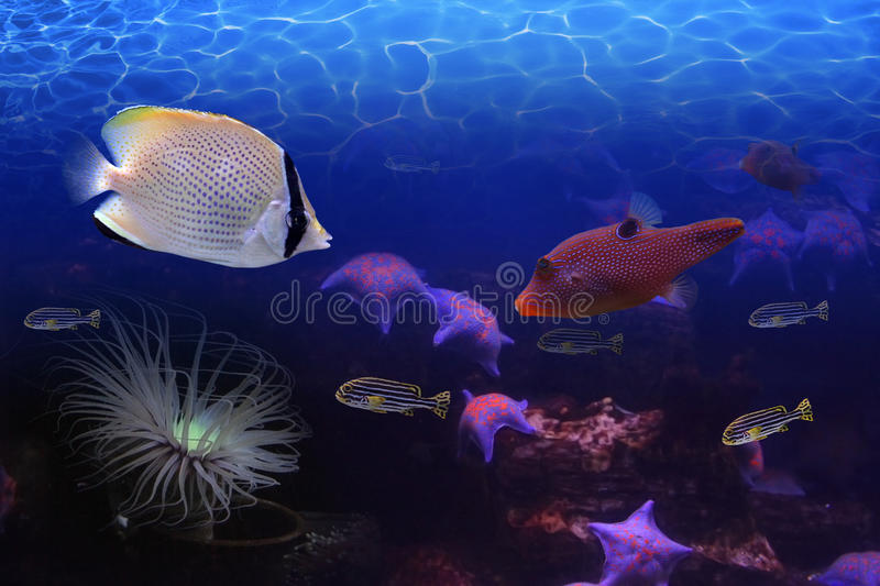 Underwater world royalty free stock photos
