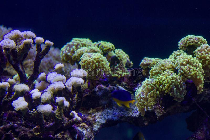 Underwater world with bright algae royalty free stock photo