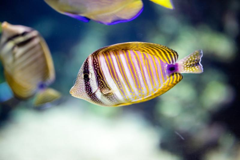 The underwater world bright exotic tropical coral fish stock photography