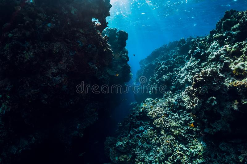 Underwater world with coral reef and rocks. Menjangan island. Underwater world with coral reef and rock. Menjangan island royalty free stock images