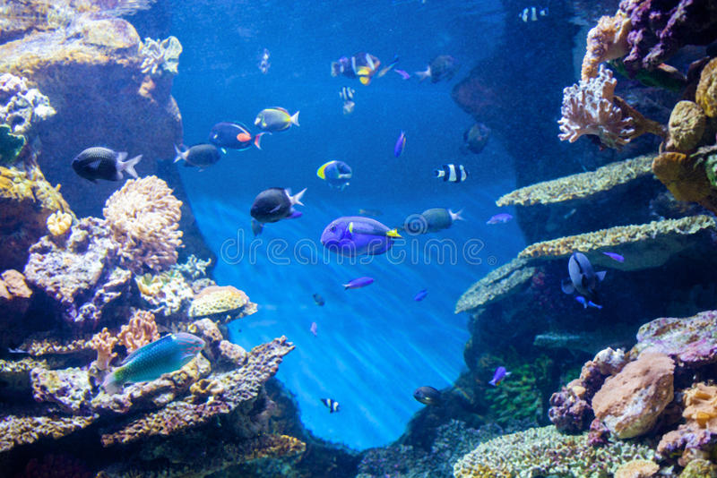 Underwater World, corals and beautiful fish. stock image