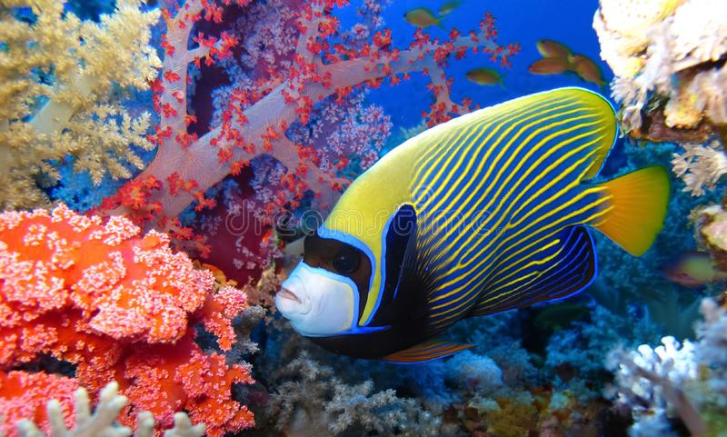 Underwater world in deep water in coral reef and plants flowers flora in blue world marine wildlife, Fish, corals and sea creature. Underwater world in deep royalty free stock photos