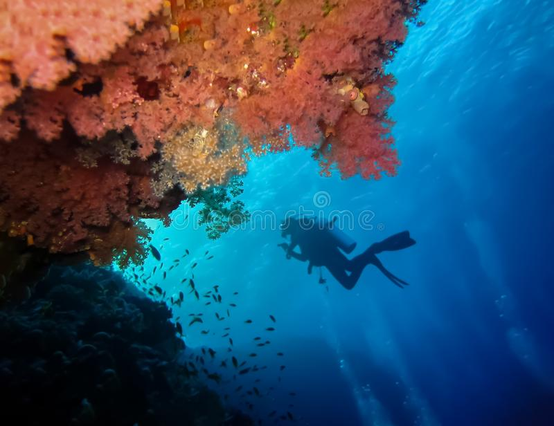 Underwater world in deep water in coral reef and plants flowers flora in blue world marine wildlife, Fish, corals, dolphins. Underwater world in deep water in stock photos