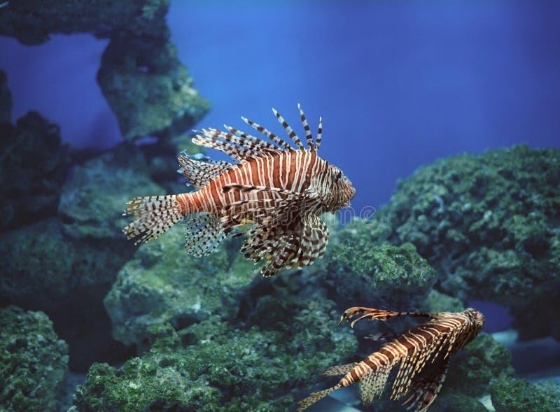 Download Underwater world. stock photo. Image of space, blue, aquarium - 32647704