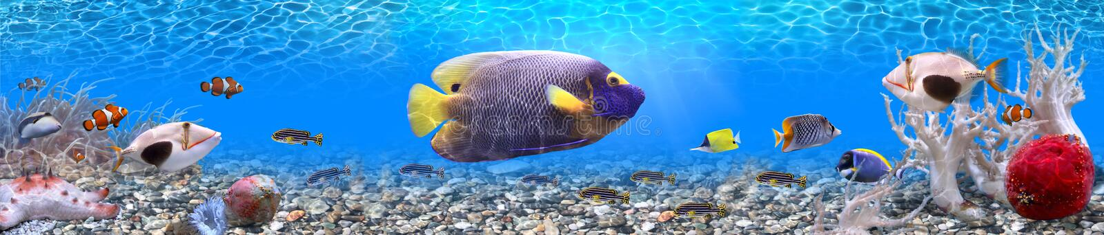Underwater world - panorama. It is very colourful photo of the underwater world and its inhabitants - exotic fishes