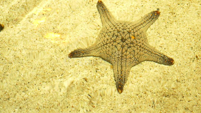 Underwater world, starfish under clear water in shallow water under the rays of the sun stock photos